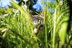 Kat in Tuin Stock Fotografie