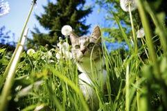 Kat in Tuin Stock Foto