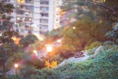 Kat in tuin Royalty-vrije Stock Fotografie