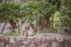 Kat in tuin Stock Afbeelding