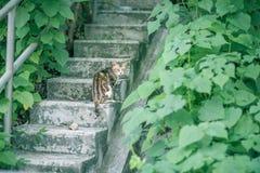Kat in tuin Royalty-vrije Stock Afbeelding