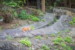 Kat in tuin Stock Afbeeldingen