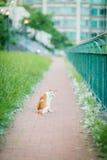 Kat in tuin Royalty-vrije Stock Afbeeldingen
