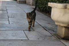 Kat in Turkije stock afbeeldingen