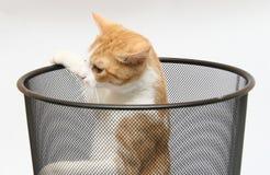 Kat in uit in werking gesteld afval - Stock Foto