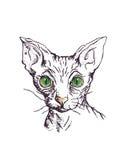 Kat van ras de Sfinx Royalty-vrije Stock Fotografie
