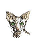 Kat van ras de Sfinx Stock Fotografie