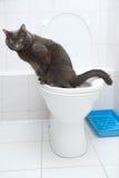 Kat van zilveren kleur in toilet Stock Foto's
