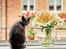 Kat in Venster met Bloemen stock fotografie