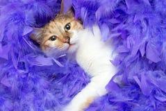 Kat in veren Stock Foto's