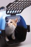 Kat in vervoerdoos Stock Foto's