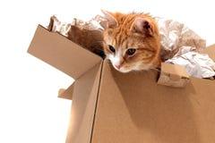 Kat in verwijderingsdoos Stock Foto's