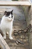 Kat in vissersboot Stock Foto
