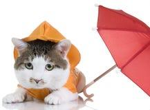 Kat voor alle weersomstandigheden Stock Afbeeldingen