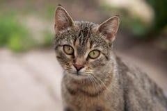 Kat, wijfje. Stock Foto