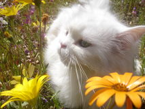 Kat in Wildflowers 2 Stock Afbeelding