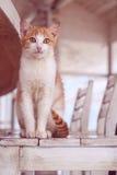 Kat in wit binnenland Stock Afbeeldingen