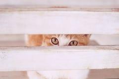 Kat in wit binnenland op chear Royalty-vrije Stock Foto's