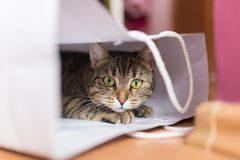 Kat in witte zak Stock Fotografie