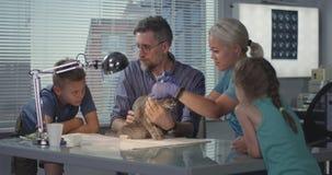 Kat worden die die bij veterinaire kliniek wordt ingeënt stock videobeelden