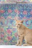 Kat & Zoete muur Royalty-vrije Stock Afbeelding