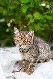 Kat in zomer Royalty-vrije Stock Afbeeldingen