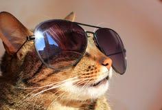 Kat in zonnebril Stock Fotografie