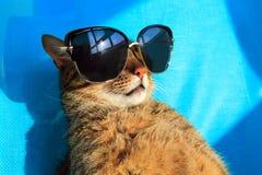 Kat in zonnebril Royalty-vrije Stock Foto's
