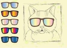 Kat in zonnebril Royalty-vrije Stock Afbeelding