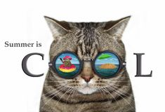 Kat in zonnebril met een bezinning 2 royalty-vrije stock afbeelding