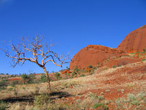 Kata Tjuta landscape. Scenic landscape of Kata Tjuta of The Olgas with dead tree and blue sky background, Northern Territory, Australia Stock Photos