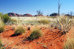 Kata Tjuta (The Olgas). A view on Kata Tjuta (The Olgas) in the morning sun Stock Photography