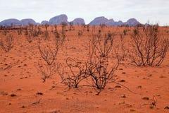 Kata Tjuta - roche d'Ayers photos libres de droits
