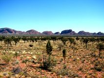 Kata Tjuta Transition. View of Kata Tjuta (the Olgas) from a lookout in the Uluru National Park (Northern Territory, Outback Australia royalty free stock photo