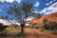 Kata Tjuta Tree e banco Fotografia de Stock Royalty Free