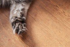 Katachtig pluizig pootclose-up op een houten vloer stock foto's