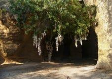 Katakombingång med trädet och bundna stycken av torkduken Arkivbilder