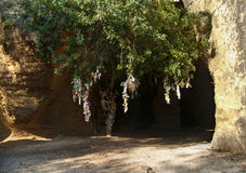 Katakumby wejście z drzewem i wiązani kawałki płótno Obrazy Stock