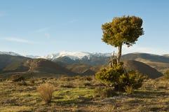 Katalończyk Pyrenees, Girona, Catalonia, Hiszpania Obraz Royalty Free