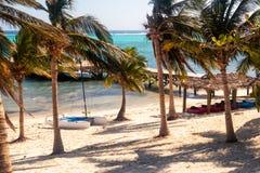 Katamaran, kajaker och palmträd Fotografering för Bildbyråer