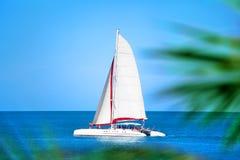 Katamaran med vitt seglar i det blåa havet, gömma i handflatan filialer bakgrund, folk kopplar av på fartyget, tur för havet för  royaltyfri foto