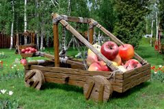 Katapult mit Äpfeln Lizenzfreie Stockfotografie