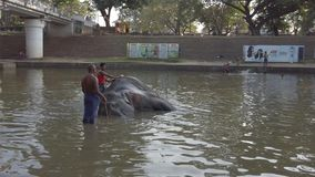 Kataragama, Sri Lanka - 2019-03-29 - éléphant obtient Bath en rivière 2 banque de vidéos