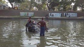 Kataragama, Sri Lanka - 2019-03-29 - elefante obtém o banho no rio 3 video estoque