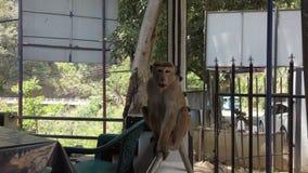 Kataragama, Sri Lanka - 2019-03-29 - macaco senta-se no trilho na borda do restaurante vídeos de arquivo