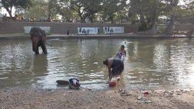 Kataragama, Sri Lanka - 2019-03-29 - suportes do elefante no rio quando banho próximo 3 dos povos video estoque