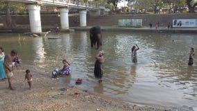 Kataragama, Sri Lanka - 2019-03-29 - supports d'éléphant en rivière tandis que bain tout près 1 de personnes banque de vidéos