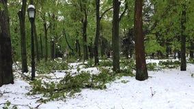 Katastrof för tung snö och stupade träd på stadsgator arkivfilmer