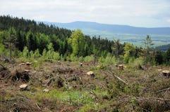 Katastrof i skog royaltyfri fotografi