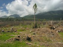 katastrofa ekologiczna Fotografia Stock